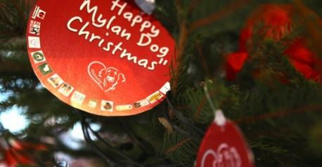 Happy Mylan Dog Christmas