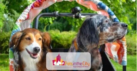 """Milano Pet week """"Flashdogmob"""""""